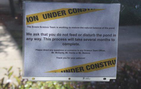 Don't Disturb the Pond